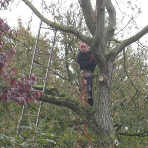 Le Jardin Dubois - Elagage, abattage soin des arbres